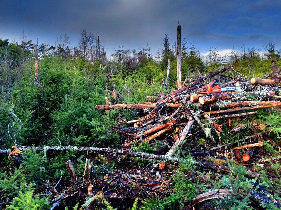 Husqvarna-240-Pile-of-wood