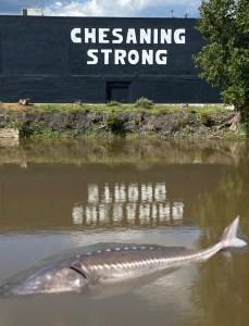 Demon Fish River Monster