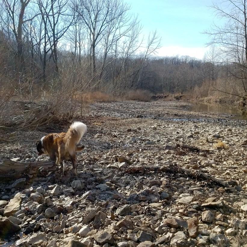 theokdogs explore grindstone nature area