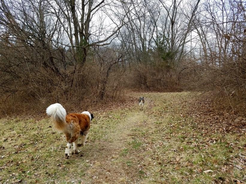 Off Leash Dog Area Cosmo Nature Area
