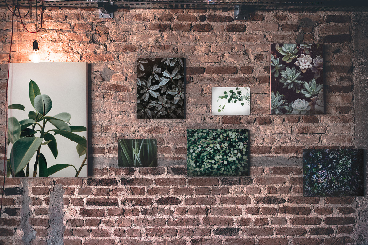 Urban Jungle Gallery Wall