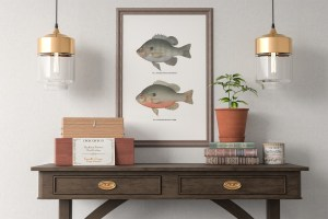 Vintage Fish Wall Art - Set of 4