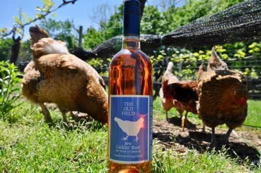 A bottle of our 2016 Cacklin Rose in the vineyards with chickens behind it.