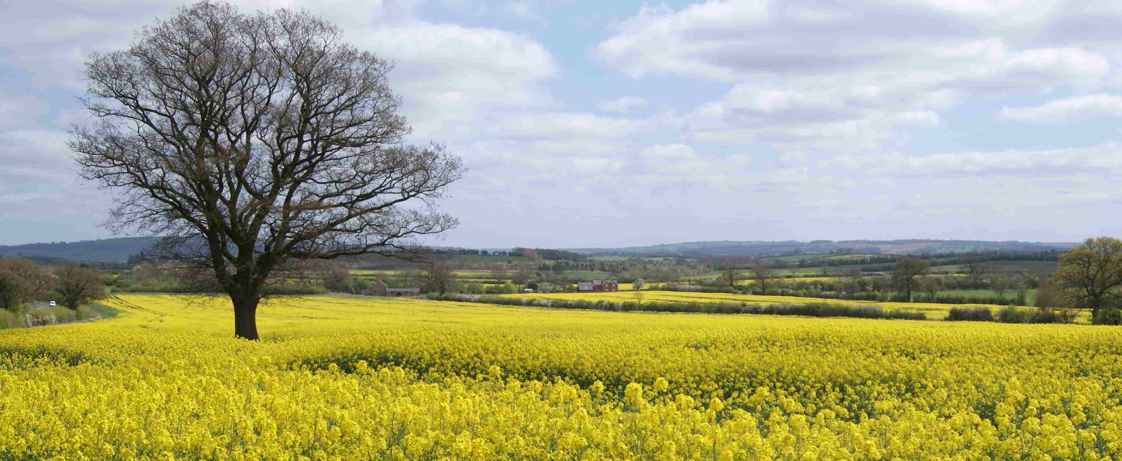 A view of the rapeseed in bloom on the road from Chipping Campden to Shipston on stour