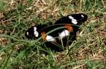 0 butterfly