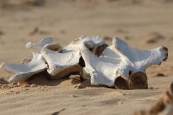 Gunsmoke Old Time Radio - The Bone Hunters