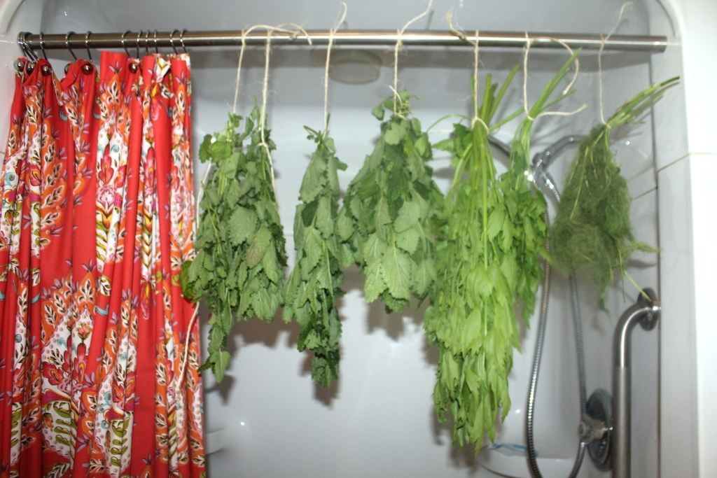 Drying herbs in the shower