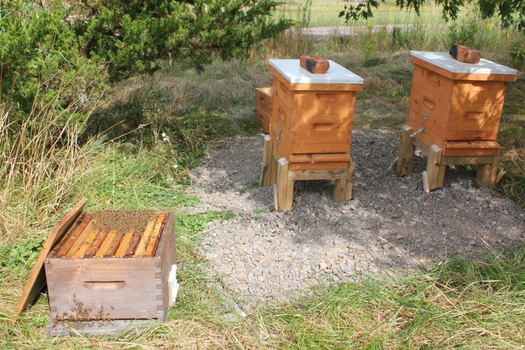 Bees in their new home