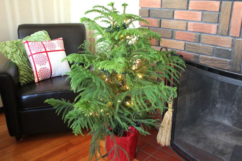 A Living Christmas Tree