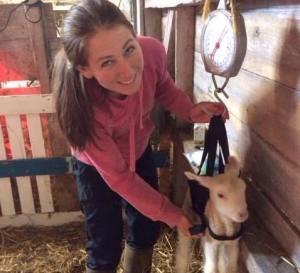 Raising milk sheep