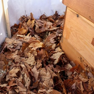 Using leaves as beehive insulation