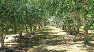 cropped-olivegrove.jpg