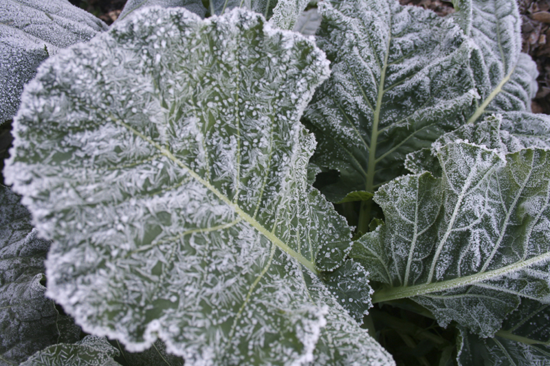 Creating Your Secret Garden | Part 2: Frost Doesn't Have to Be a Foe