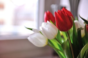 -red-white-tulips-sun-window