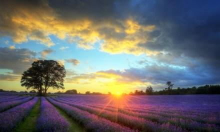撒種的比喻:愛如種子 Love as Seeds (Parable of the Sower)