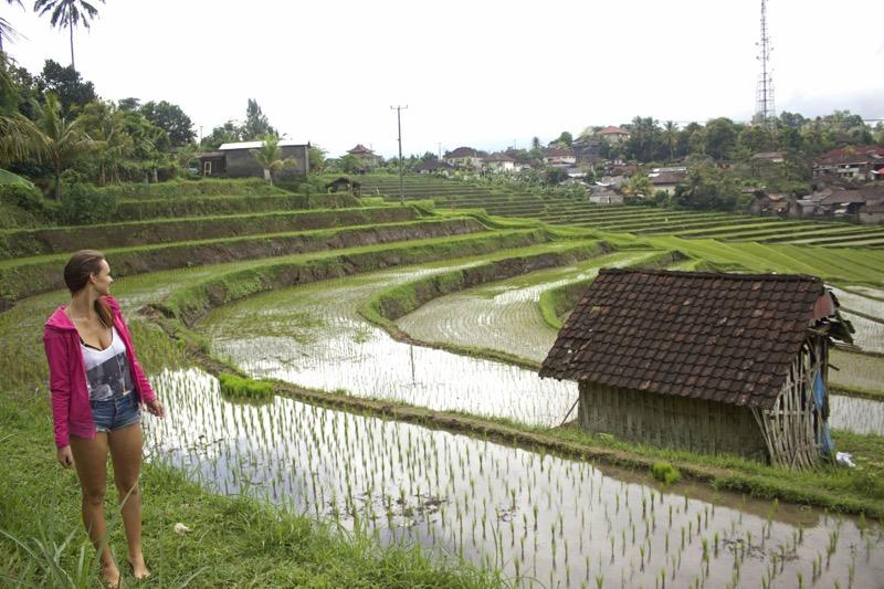 ryžové polia bali