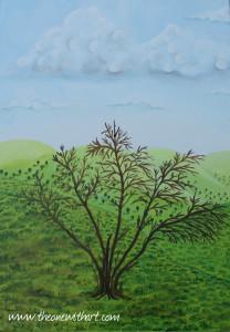 Pomagranet tree 4