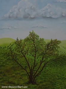 Pomagranet tree 5
