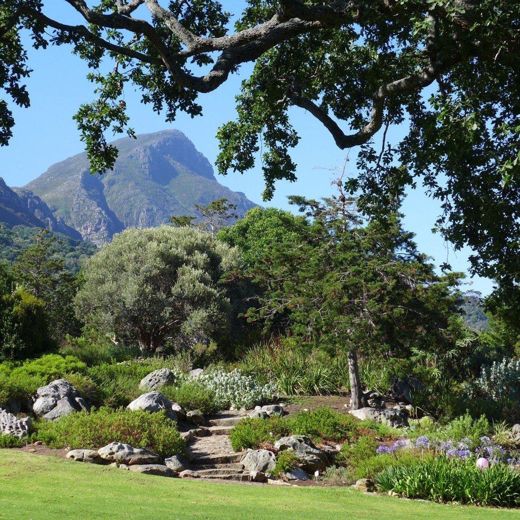 Kirstenbosch-Gardens-flowers-mountain