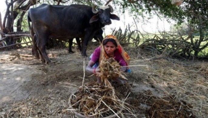 Woman collects buffalo dung outside her house at Fangadi Village on the outskirts of Ahmedabad