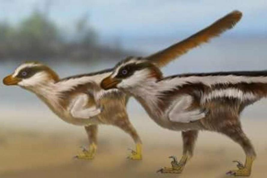 Worlds-smallest-dinosaur-tracks-reveal-new-sparrow-sized-raptor
