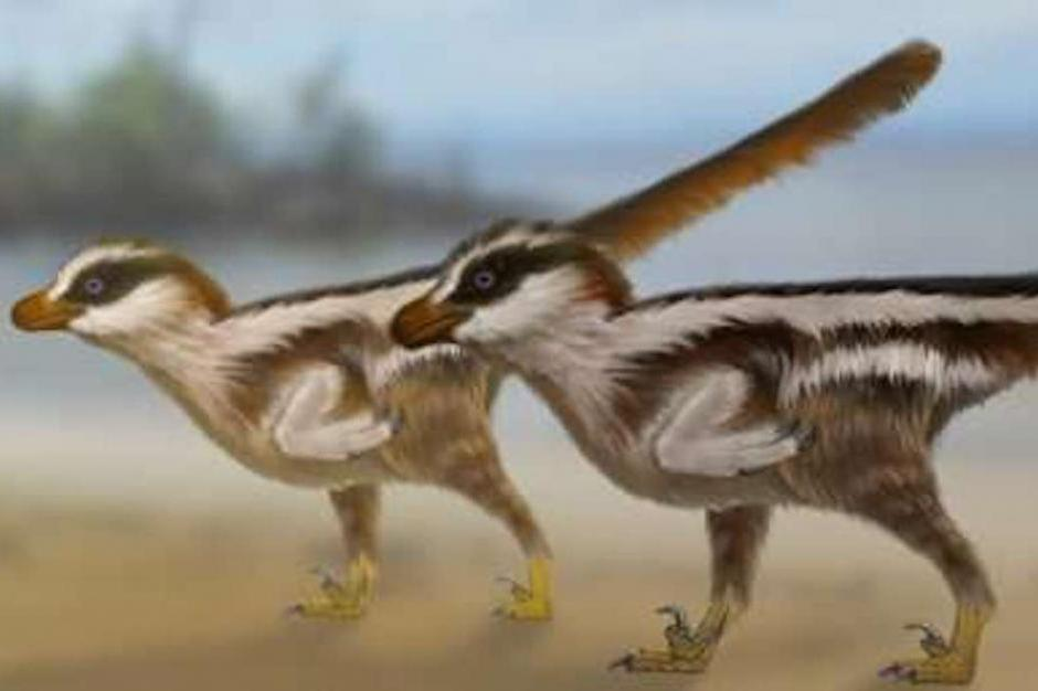 Worlds-smallest-dinosaur-tracks-reveal-new-sparrow-sized-raptor