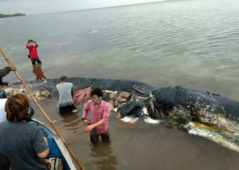whale in Indonesia- AFP