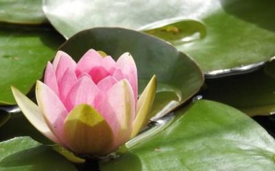 Le choix de l'âme et la maîtrise de l'ego, partie 1, l'âme à l'école de la Terre