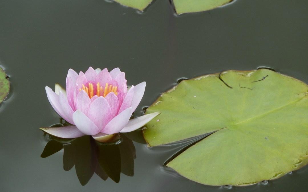 Mort et méditation, partie 1, mourir à soi-même