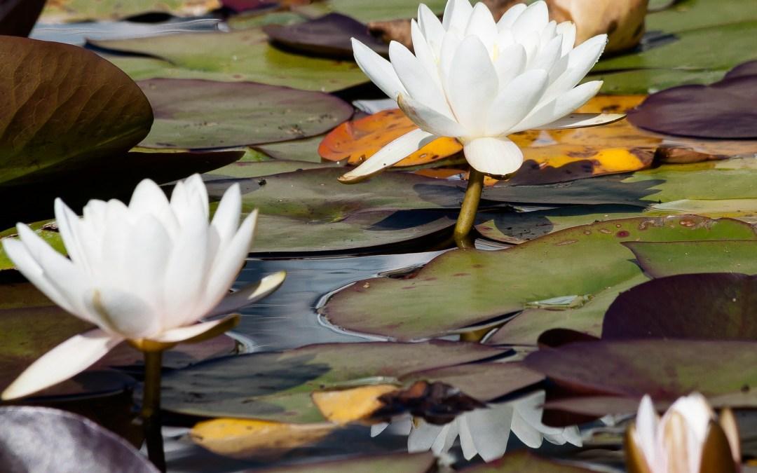Yoga, partie 2, le yatra spirituel