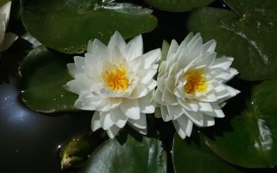 La libération de l'âme ou comment libérer le Divin en soi
