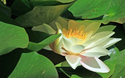 Théo devient formateur, partie 16, résonance divine et résonance spirituelle