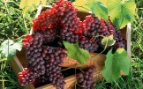 grapes_fruit_boxes_clusters_5828_1920x1200