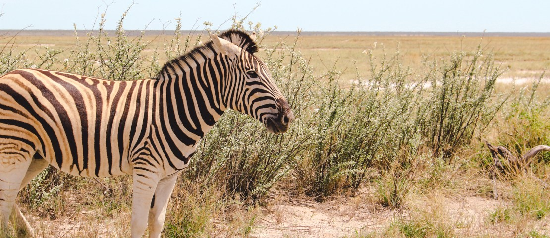 25 tips for your visit to Etosha