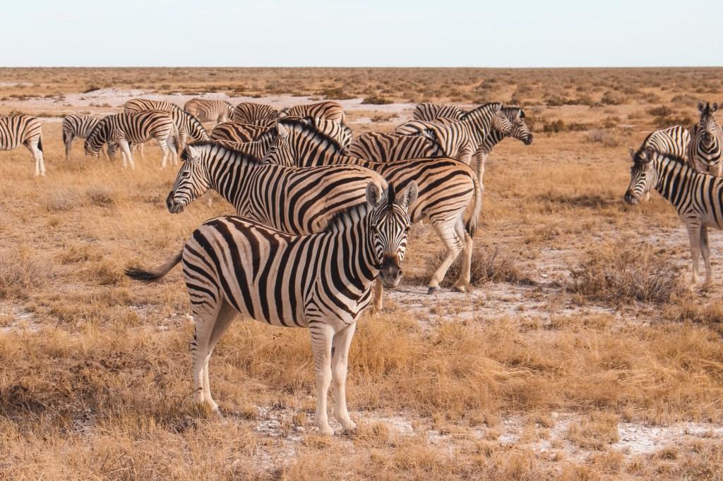 Etosha National Park | The Orange Backpack
