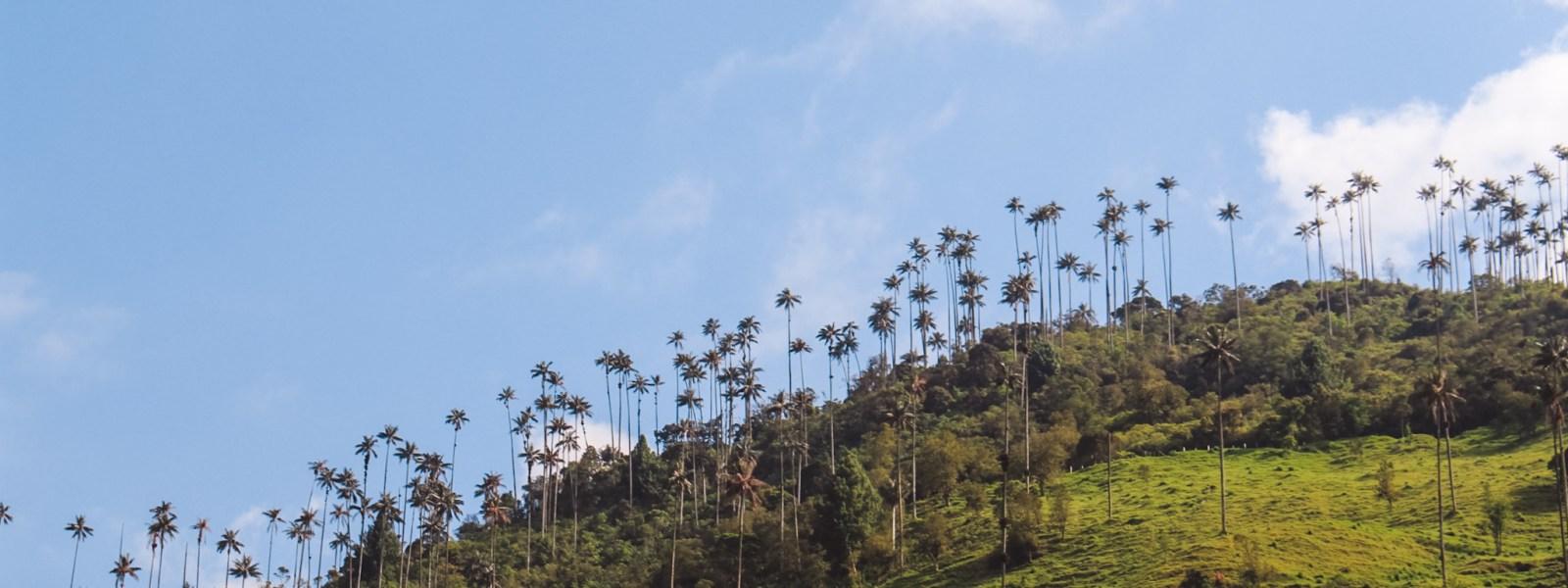 Valle de Cocora: hiken tussen de palmbomen in Colombia