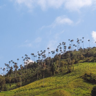 reisroute in Colombia | Valle de Cocora | The Orange Backpack