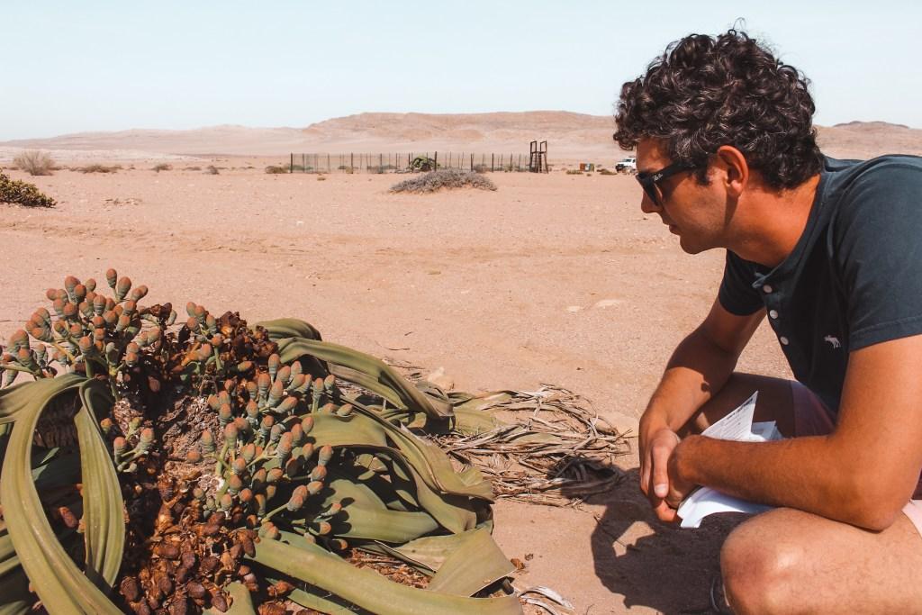 Swakopmund | De Welwitschia Drive | De oranje rugzak