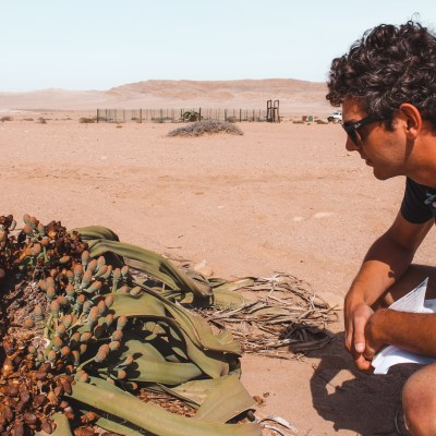 Swakopmund | The Welwitschia Drive | The Orange Backpack