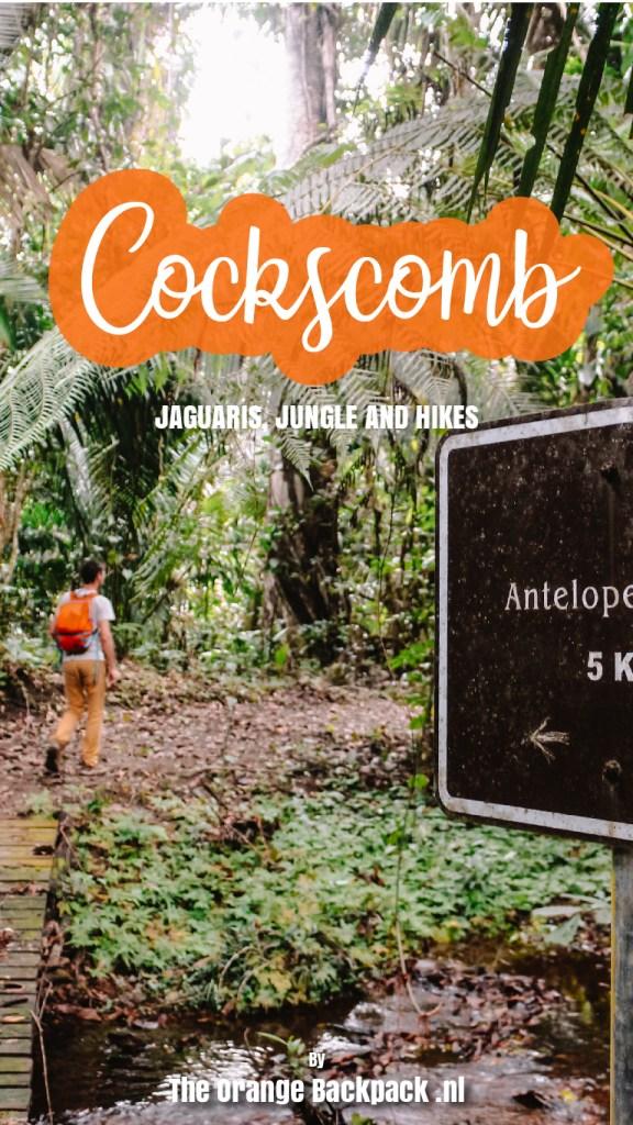 Cockscomb Basin Wildlife Sanctuary in Belize