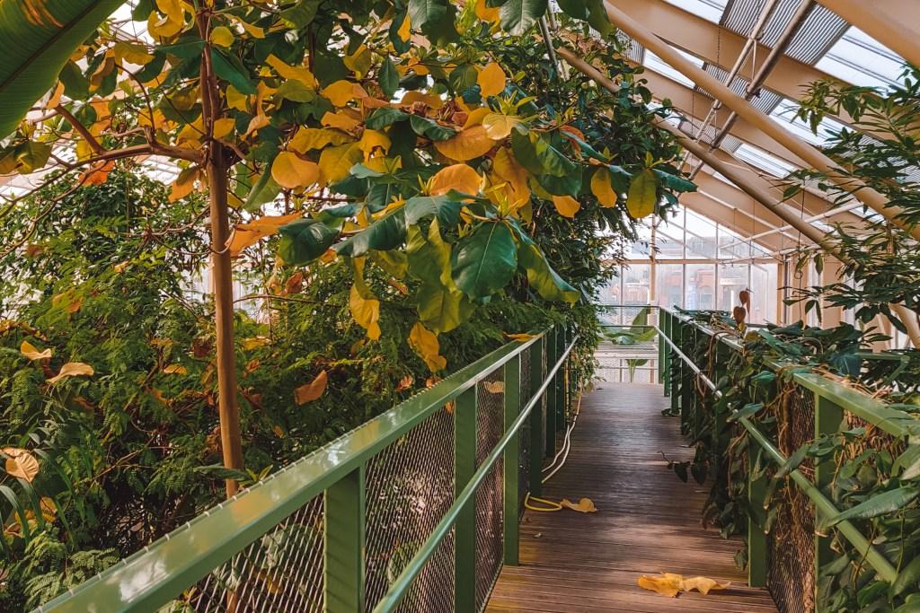 Hortus Botanicus in Leiden in Nederland | The Orange Backpack