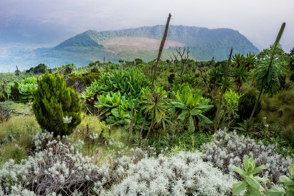 Beste plek voor 30e verjaardag - Congo