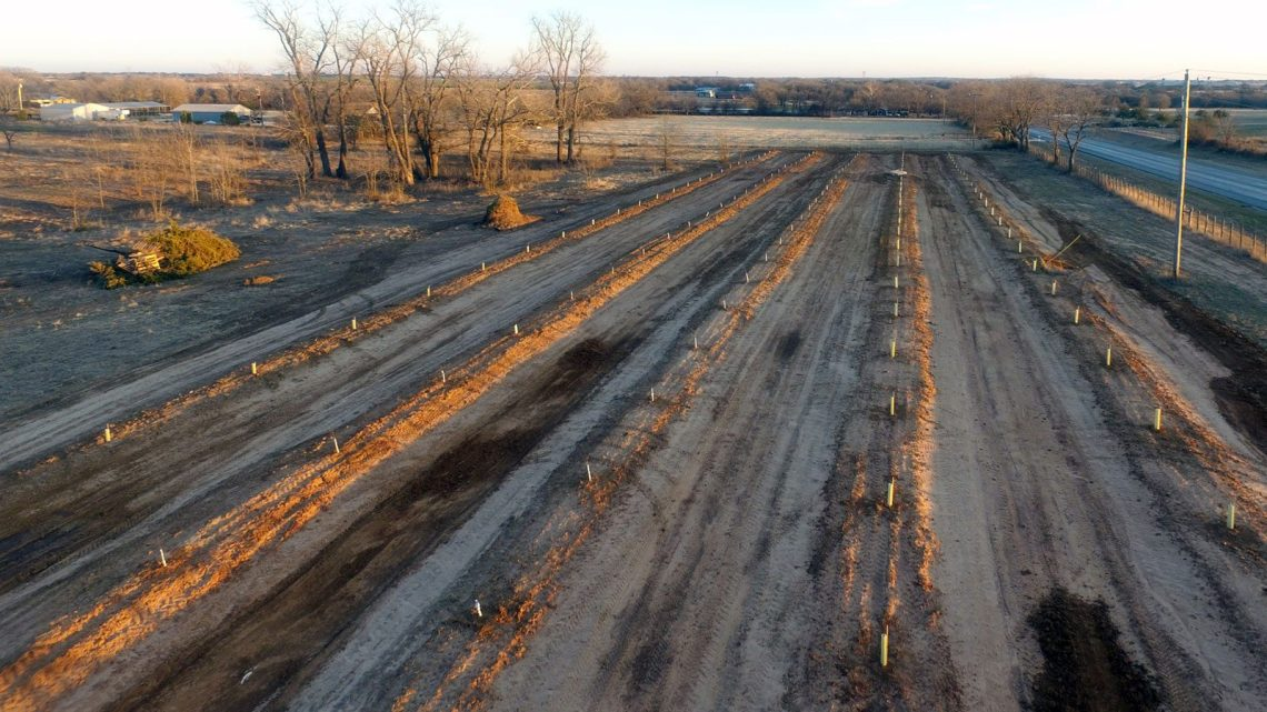 The Peach orchard after planting