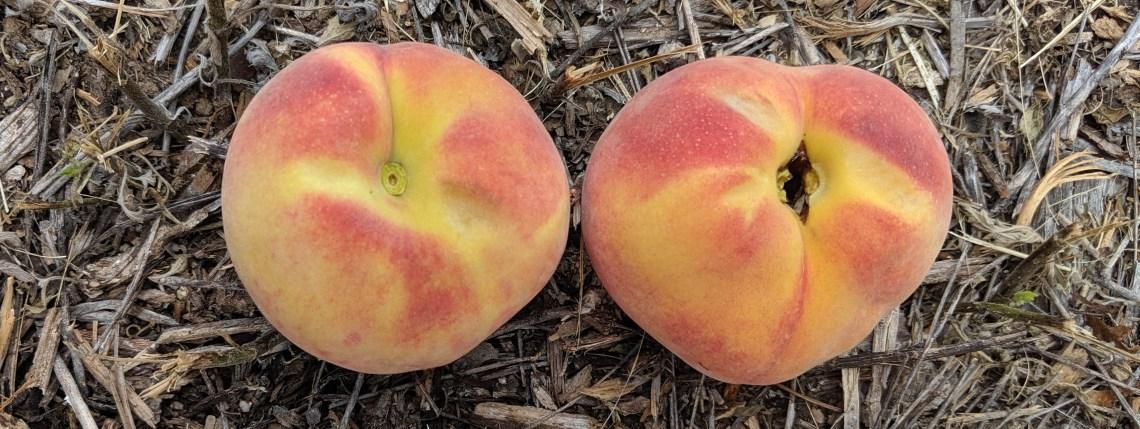 split pit peach
