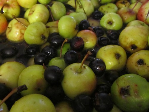 Crabapples and sloes