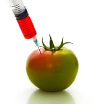 USDA GMO