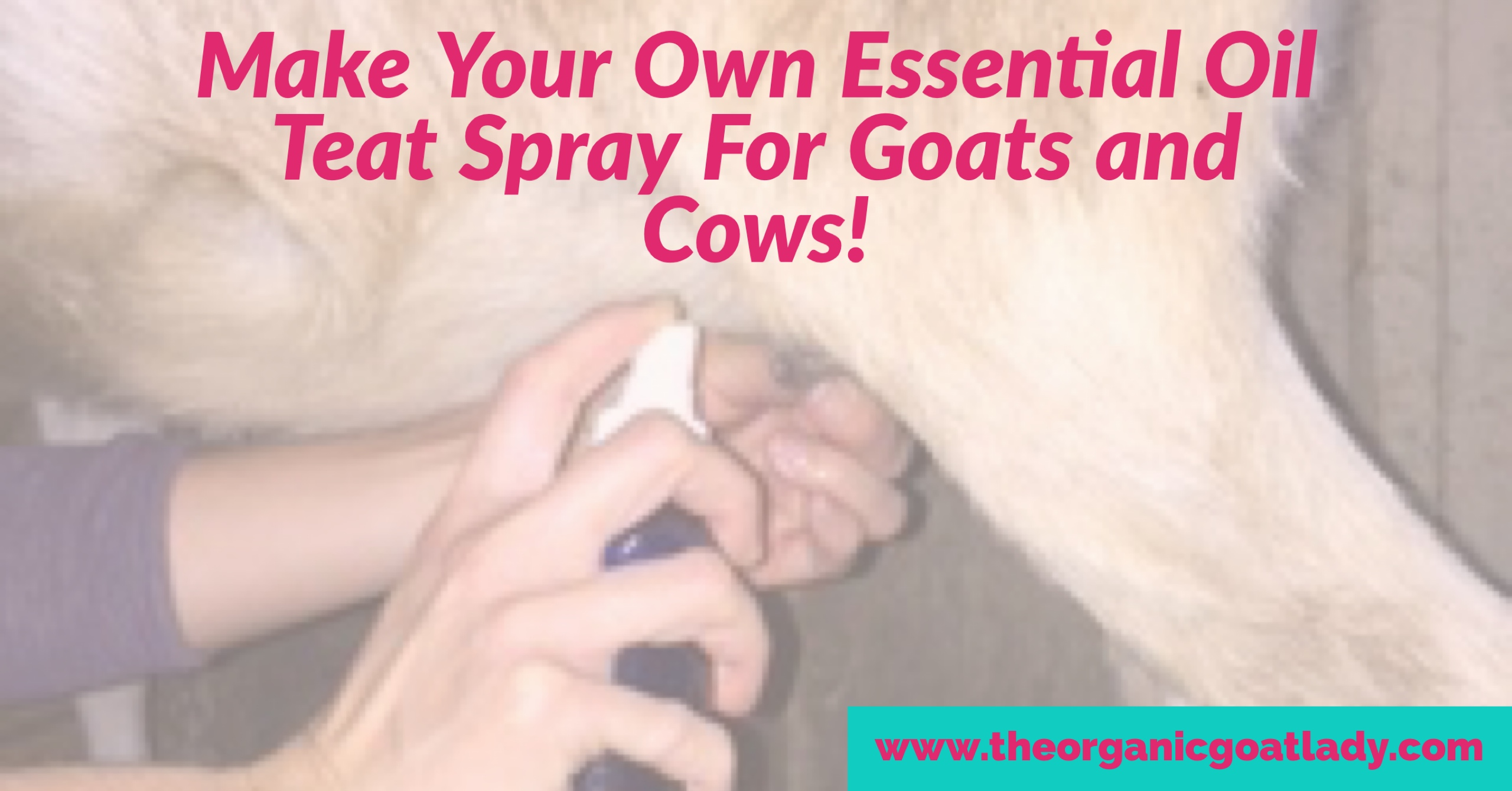 Make Your Own Teat Spray For Goats And Cows!