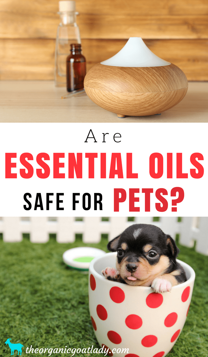 Are Essential Oils Safe For Pets