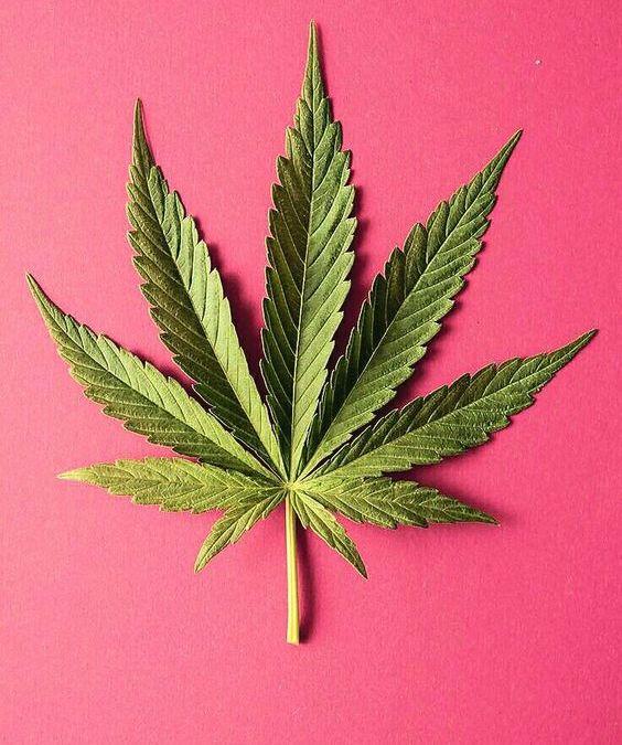 Why Cannabis Works