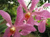 Flowers of Vietnam